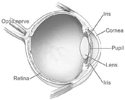 Glossary Anatomy Of The Eye