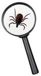 picture of deer tick and magnifying glass