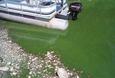 picture of surface water affected by blue-green algae